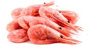 shrimps_w1